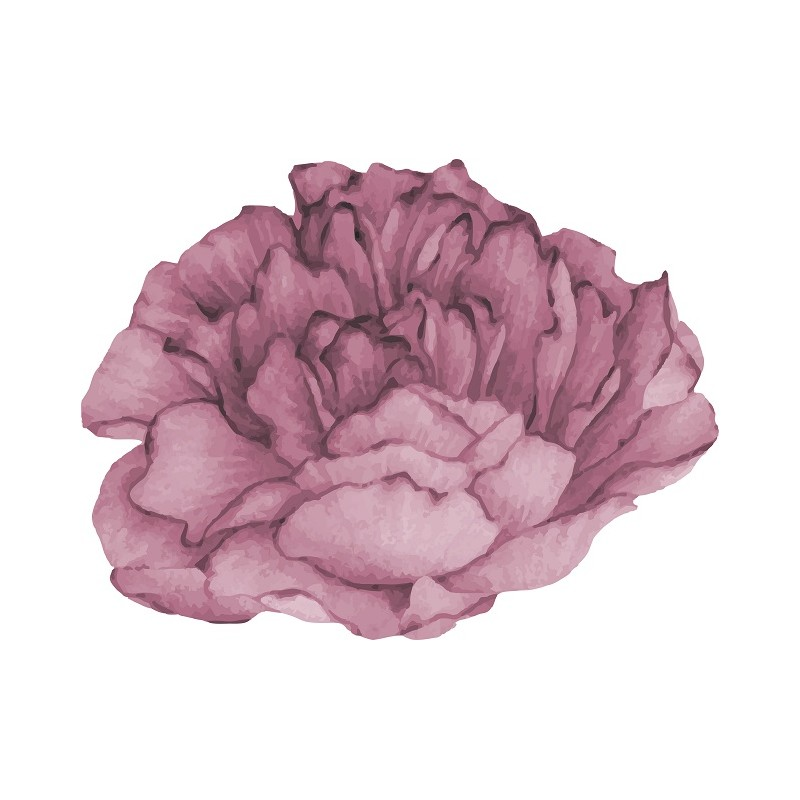 Large Pink Peony Flower...